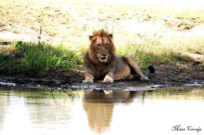 2 Nights Lion King Safari to Kruger from Nelspruit