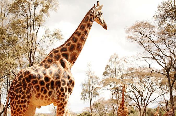 NAIROBI DAY TOUR, Elephant orphanage , giraffe center and Bomas of kenya