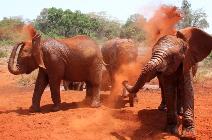 Half Day karen Blixen,Giraffe Centre and Elephant Orphanage
