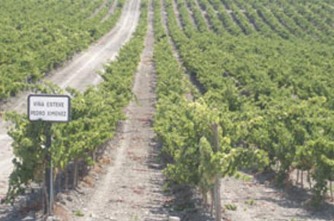 Private Jerez Winery And Jerez Brandy Experience From Seville
