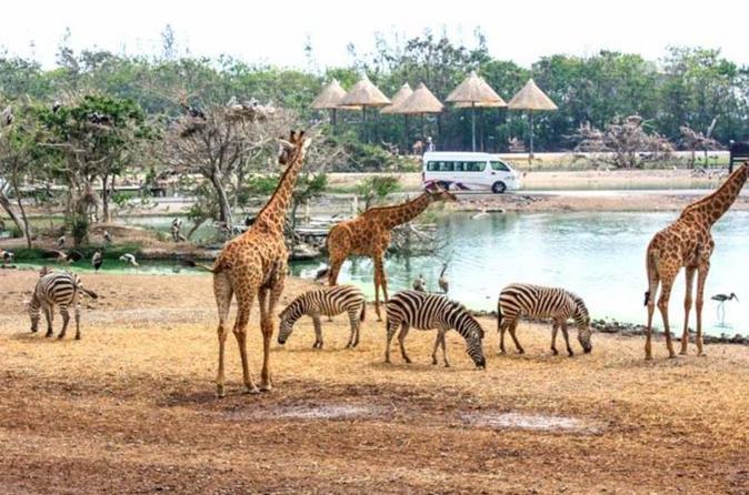 Ganztägige Tour Safari World und Marine Park