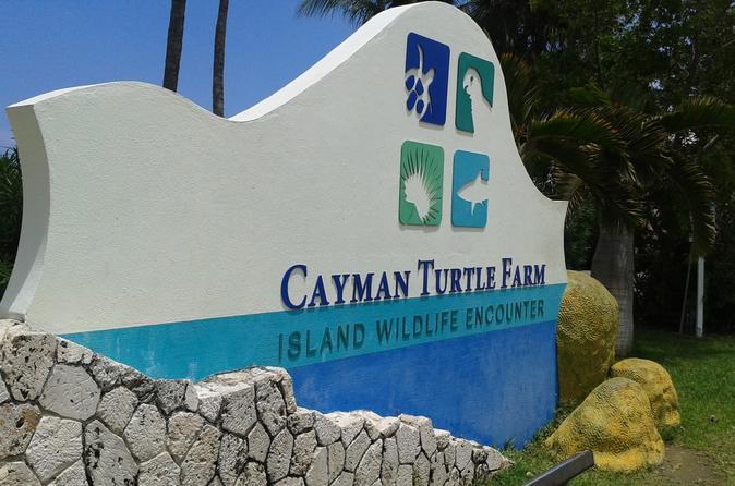 Cayman Turtle Farm and Stingray City Fun Day