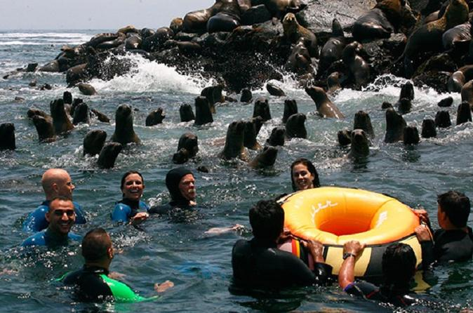 Palomino islands tour plus swimming with sea lions experience in lima 196231