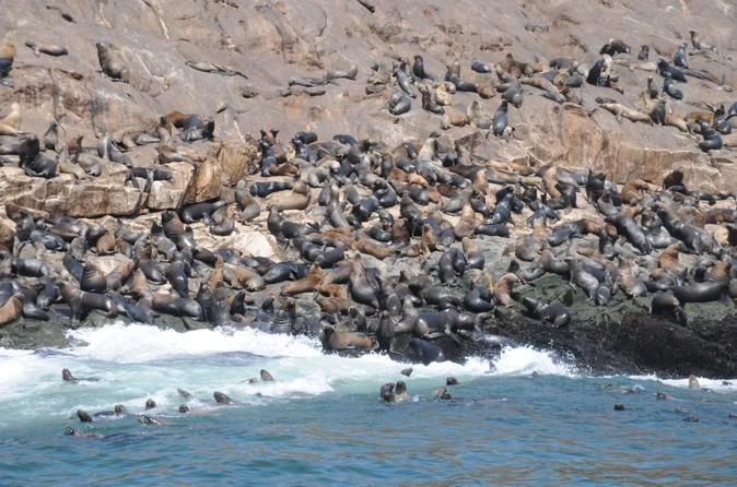 Palomino Islands Tour Plus Swimming with Sea Lions Experience