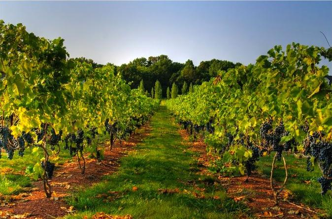 Varna horses and vines tour in varna 295833