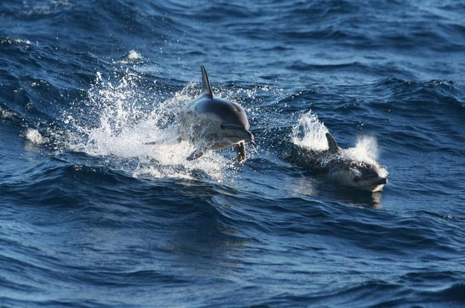 Port Stephens Day Trip from Sydney Including Dolphin Watch Cruise