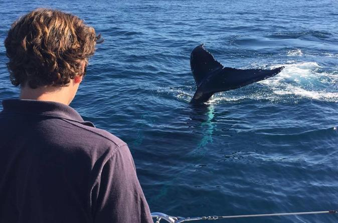 Small-Group Sydney Whale Watching Sailing Tour from Manly