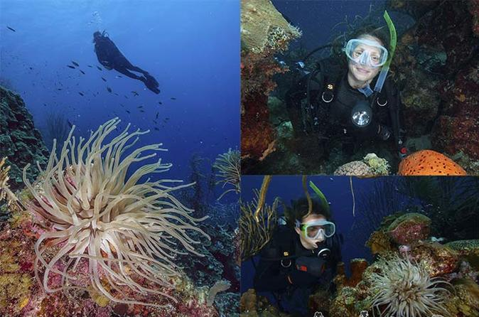 LOS ROQUES UNDERWATER PHOTOGRAPHY VIP TOUR