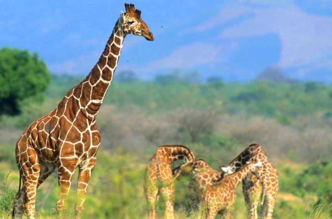 3 Days Maasai Mara