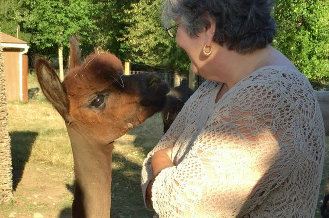 Alpaca Ranch and Fiber Processing Mill Tour