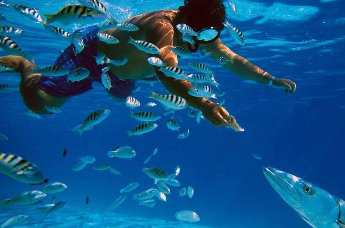 Snorkeling and Beach Club Access in Cozumel with Lunch