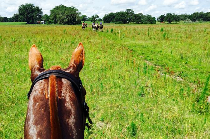 Adventurous Trail Horseback Riding Experiences