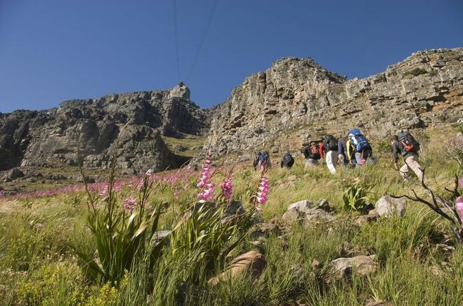 Private Hiking Tour of Table Mountain