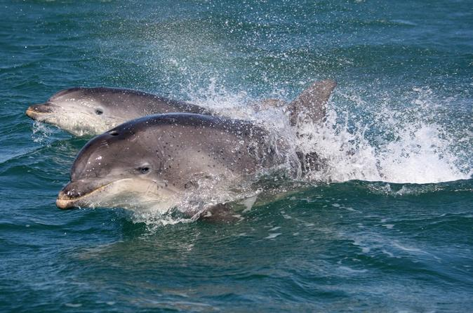 Dingle and Fungie Dolphin Boat Tour from Killarney