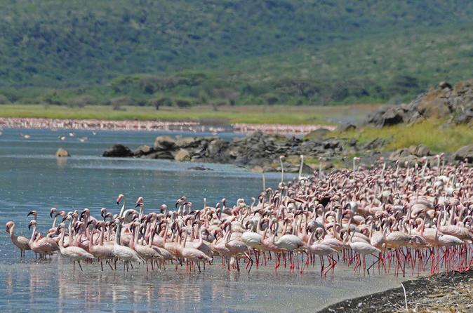 Lake Nakuru National Park- Guaranteed  Departure Day Trip from Nairobi