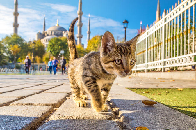 7-Day Istanbul Welcome Card For Walking Tours, Transport And Bosphorus Cruise