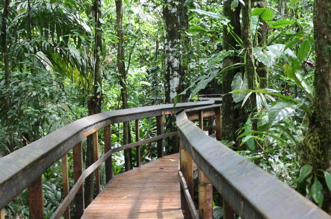 Cinco Ceibas Rainforest Reserve Bird Watching Tour from San Jose