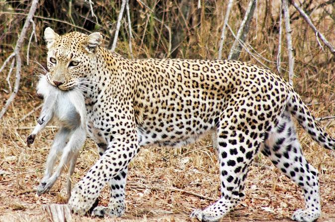 6 day wonderful kruger national park safari from johannesburg in johannesburg 241171
