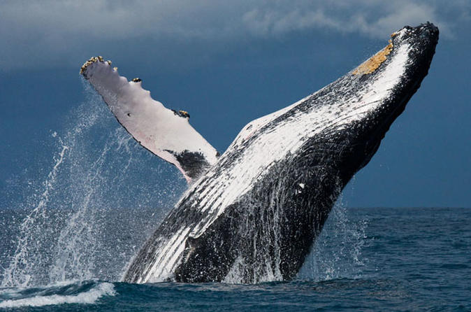 New hampshire whale watch in manchester 248394