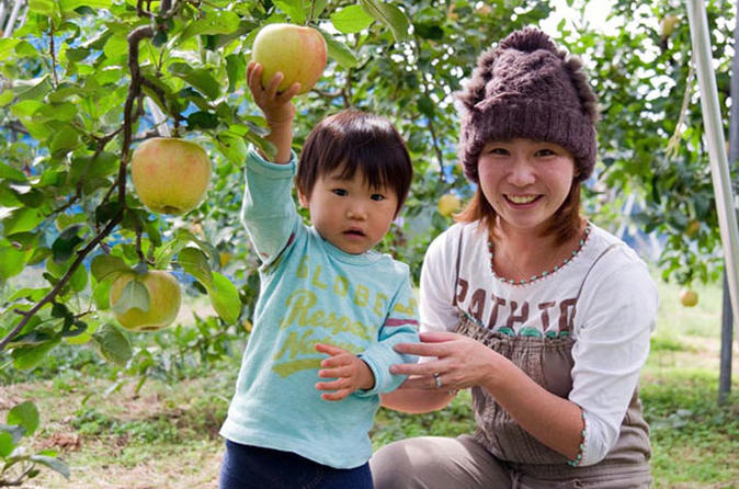 Matsuyama Apple Picking - All you can eat, No time limit ! Masaoka Apple Farm