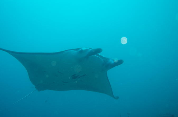 Nusa Penida and Manta Point Day Dive with Bali Diving: Close Encounter With Manta Ray - For Certified Divers Only