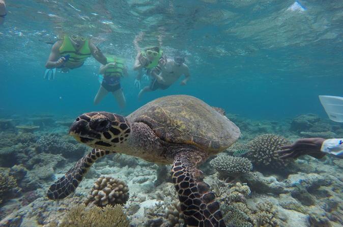 Snorkeling Safari
