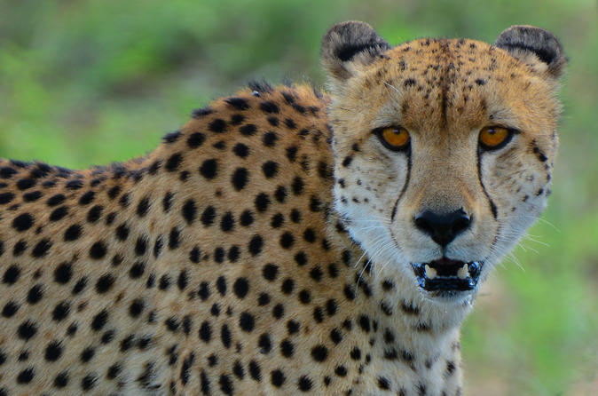 3-Day Quick Tour of Kruger National Park from Skukuza Airport