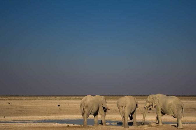3 day etosha national park tour from windhoek in windhoek 193292