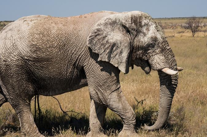6-Day Dunes and Wildlife Tour from Windhoek
