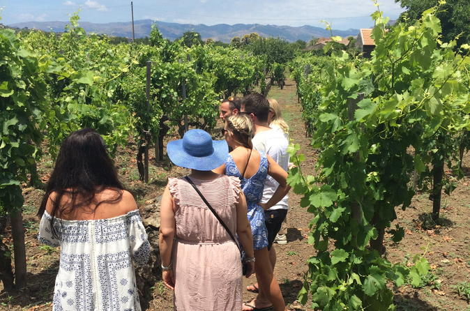 Mt etna wineries tour from taormina in taormina 250207