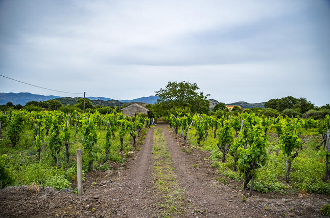Mt Etna Wineries Tour from Taormina
