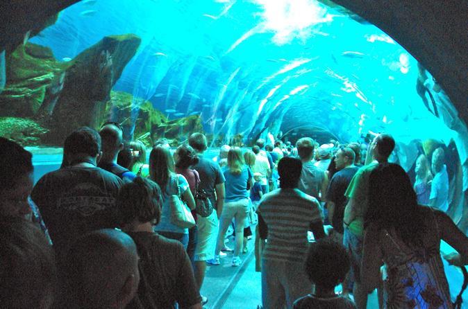 Small Group Half Day Trip to Georgia Aquarium