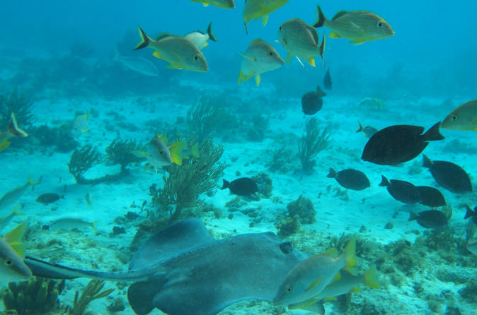 Stingray City and Snorkel Tour With Lunch