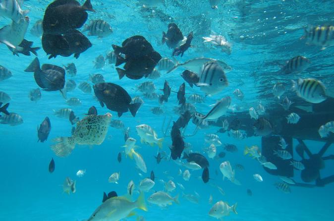 Stingray City Experience Plus One Snorkeling Stop