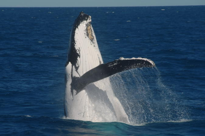 Half day whale watching tour on the mv whalesong in hervey bay 193680