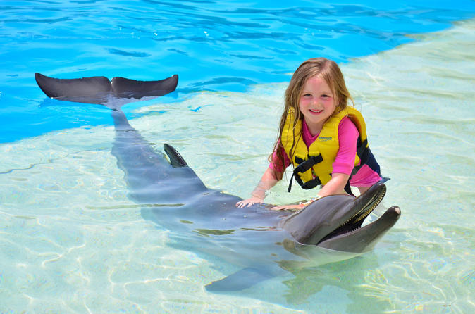 Dolphin Show and Swim with Dolphins Option