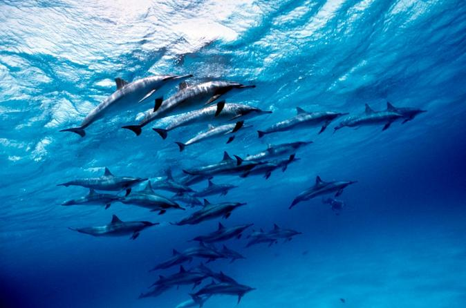 Discover Red Sea: Wild Dolphin Habitat Snorkeling Trip From Marsa Alam