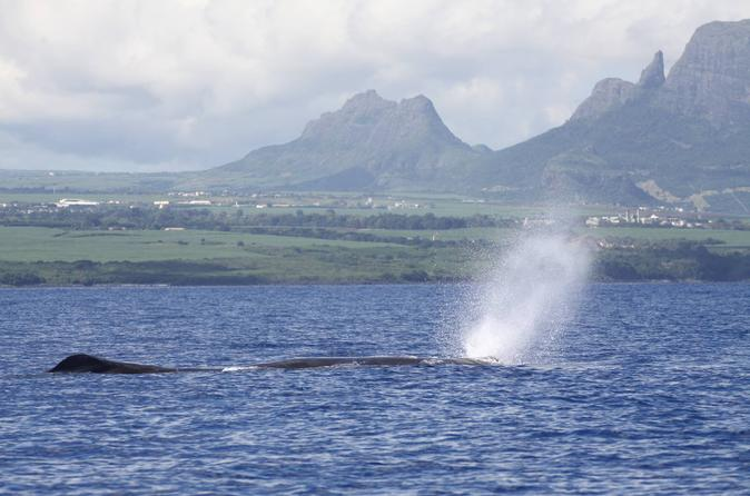 Full-Day Mauritius Marine Discovery Tour with Snorkelling from Grand Riviere Noire