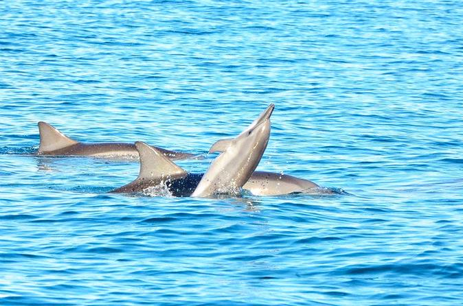 Port Louis Swim with Wild Dolphins on Benitiers Island: Day Tour from Grand Riviere Noire Mauritius, Africa