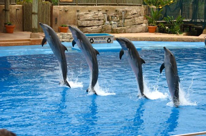 Dolphin Show at the Dubai Creek Park