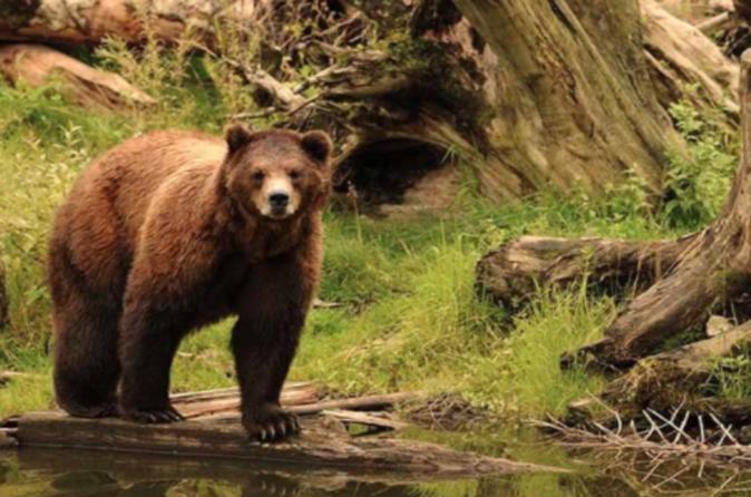 Sitka Shore Excursion: Sitka Bears, Raptor Center, And Totem Park Tour