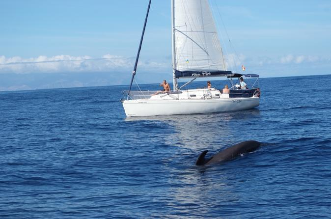 Whale and dolphin watching 3 hour group sailing yacht charter in costa adeje 196778
