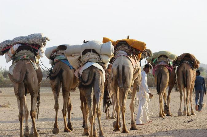 6-Day Private Royal Rajasthan Tour from New Delhi with Desert Camel Safari