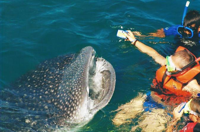 Aventura de nado com tubarões-baleia em Cancun