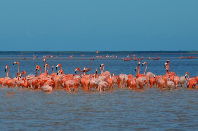 Excursão Particular: Ek Balam, Santuário de Flamingos Rosa e Degustação em Fábrica de Tequila, partindo de Cancún