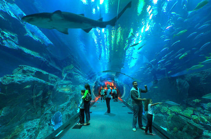 Underwater Zoo, Dubai Aquarium and Ice Rink Entrance Ticket