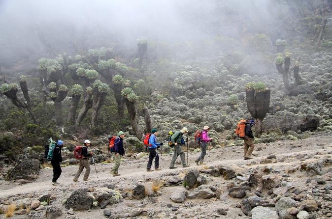 7 days mount kilimanjaro trekking via machame route from arusha in arusha 235013