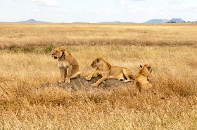 2 Days Safari From Arusha Town, Tanzania