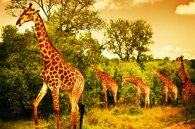 5 Days Safari In Tarangire, Lake Manyara, Ngorongoro and Serengeti NP From Arusha Town
