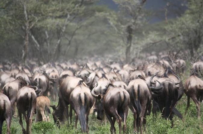 Tanzania 5 Days Private Safari - Wildebeest Migration from Arusha